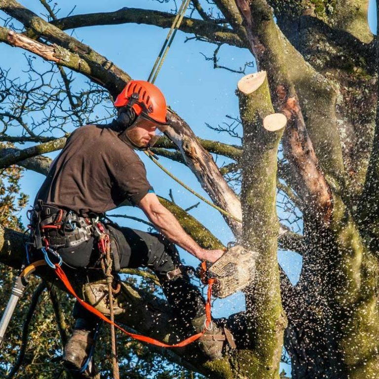 Superior Quality and Affordable Tree Service Company in East Carolina