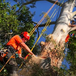 Wilson Tree Service Pros removing tree limbs
