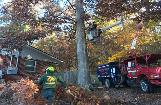 Wilson North Carolina Tree Services in action