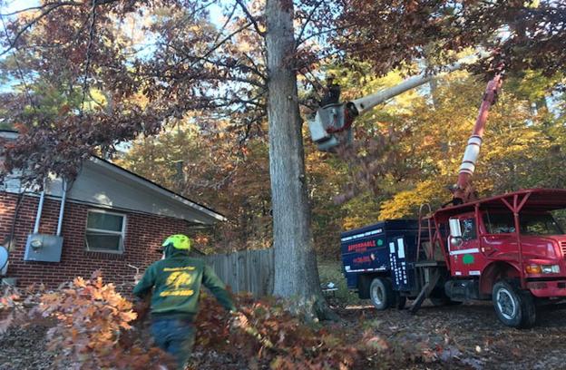 Wilson North Carolina Tree Services in action